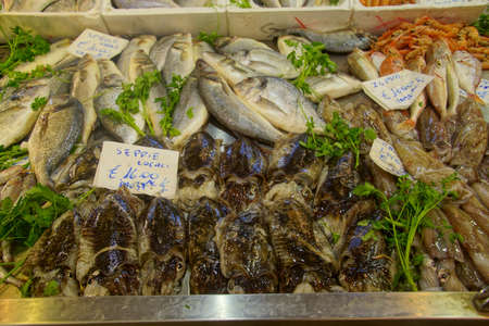 Fresh cuttlefish for sale at the central Market in Civitavecchia, Italy