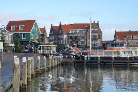Swans swim in the Marina and waterfront of Volendam, Netherlands Redactioneel