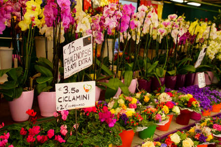 Fresh bright colored flowers in the market in Bolzano, Italy