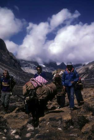 KHUMBU, NEPAL - OCT 25, 1979 - Sirdar and sherpas  guide yak to next camp in Himalayan Nepal Editorial