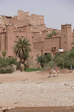 Camels at the base of the hilltop village of Ait ben Haddou,  Morocco, Africa Standard-Bild - 120887525