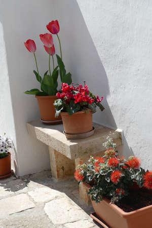 Flowers along a white washed trulli wall in Alberobello, Puglia, Italy