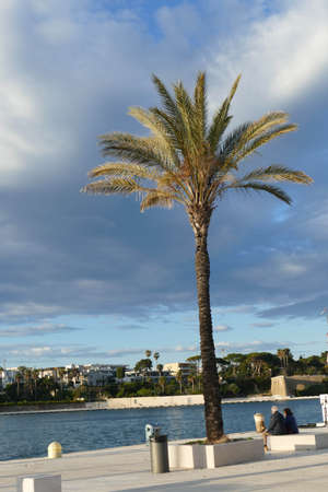 Palm trees on the waterfront of Brindisi, Puglia, Italy
