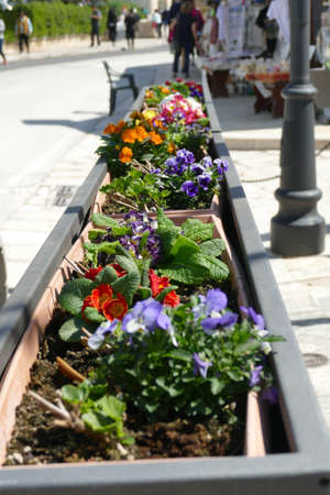 Curbside spring flowers in Alberobello, Puglia, Italy