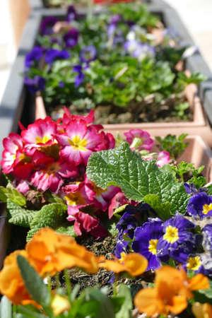 Curbside spring flowers in Alberobello, Puglia, Italy Standard-Bild - 121492399