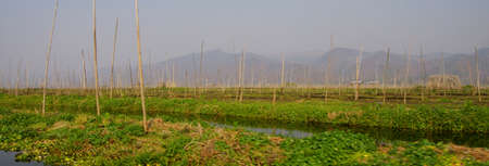 Canals intersect the floating vegetable gardens on Inle Lake,  Myanmar (Burma)