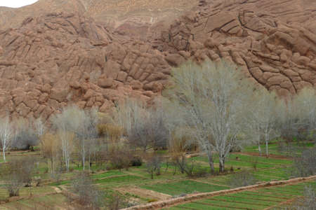 Spring willows and deformed rocky hills near the Todra Gorge,  Morocco, Africa