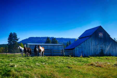 Cheval et ancienne grange dans les pâturages le long de la rivière Teanaway près de Cle Elum dans l'est de Washington