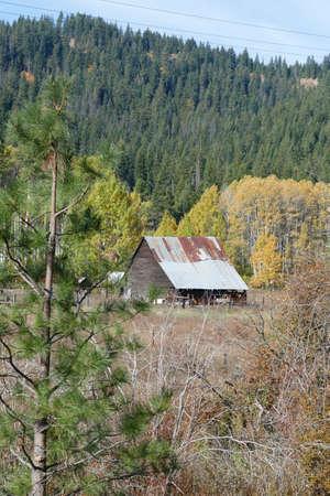 Vintage wooden barn with autumn poplars  in Wenatchee River valley, eastern Washington Фото со стока