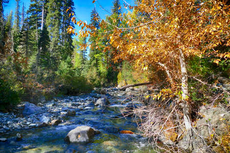 Fall colors of trees along a stream in eastern Washington