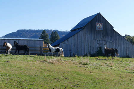 Horse and old barn in pasture along the Teanaway river near Cle Elum in eastern Washington Banque d'images - 132459230