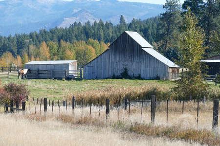 Cheval et ancienne grange dans les pâturages le long de la rivière Teanaway près de Cle Elum dans l'est de Washington Banque d'images