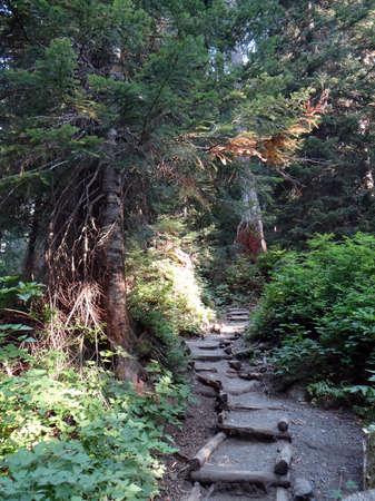 Trail along a forested ridge near Snoqualmie Pass, Washington Stock fotó
