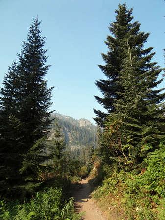 Trail along a forested ridge near Snoqualmie Pass, Washington
