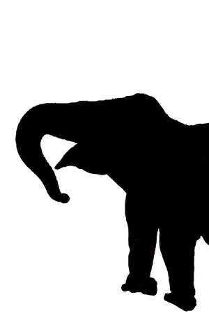 Silhouette of Large, old  female elephant at the  Elephant conservation camp near Kalaw Myanmar (Burma)