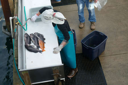 Cleaning the day's catch of rockfish from charter boat, Newport, Oregon coast Stok Fotoğraf