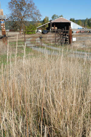 Dried grass frames an old barn along the Teanaway river near Cle Elum in eastern Washington Banque d'images - 134078944