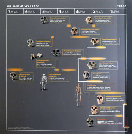 SAN FRANCISCO - NOV 28 2019 - Human evolution family tree chart, California Academy of Science