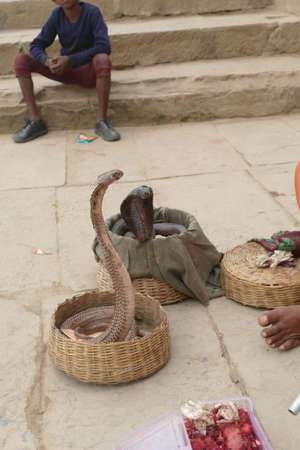 Cobras of snake charmer on the ghats of  Varanasi, India Stock Photo