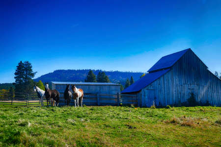 Horse and old barn in pasture along the Teanaway river near Cle Elum in eastern Washington Banque d'images - 140518846