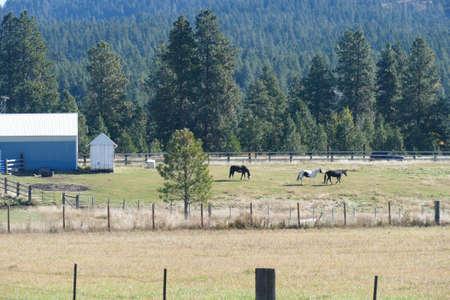 Dried grass frames an old barn along the Teanaway river near Cle Elum in eastern Washington