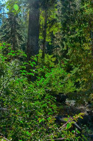 Conifers and shadows on autumn hillside in eastern Washington Standard-Bild - 140372289