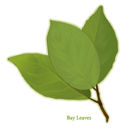 Bay Leaves Herb, aromatic leaves of evergreen Bay Laurel tree, to season meats, poultry, stews, soups. Classic ingredient of French herb blend, Bouquet garni.  Иллюстрация