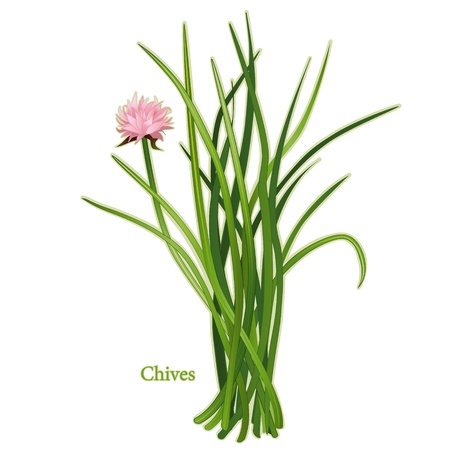 odor: Chives Herb, slender, hollow leaves, mild onion flavor. Classic ingredient of French herb blend, Fines Herbes.