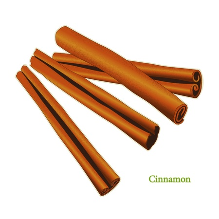 Cinnamon Sticks, classic spice from the bark of tropical Asian trees, flavorful, aromatic for cooking, baking and medicinal uses.  Vector