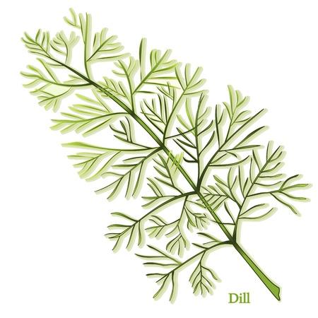 plantas medicinales: Eneldo Hierba, hojas finas, aromáticas utilizadas para sazonar los alimentos y encurtidos. También se llama eneldo. Vectores