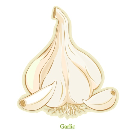 allium: Garlic Bulb and Cloves, popular seasoning for cooking, salads, vegetables in worldwide cuisines. Medicinal.