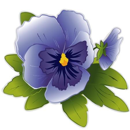 하늘색 팬지 꽃