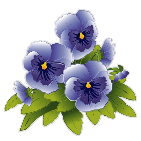pansies: Sky Blue Pansy Flowers