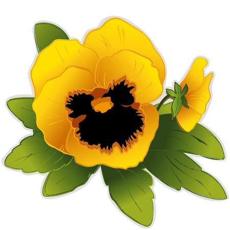 원예: 골든 팬지 꽃