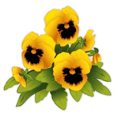 골든 팬지 꽃