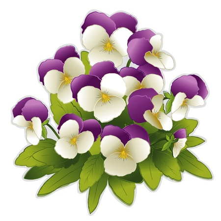 Johnny Jump Up Pansy flowers (Viola tricolor) Vector