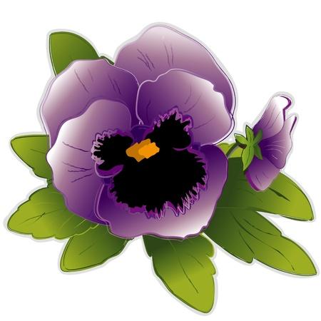ラベンダーのパンジーの花