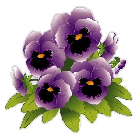 natura morta con fiori: Fiori Pansy Lavanda Vettoriali