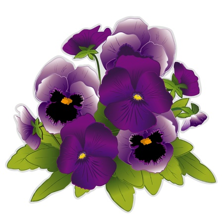 Lavender and Purple Pansy flowers  Vector
