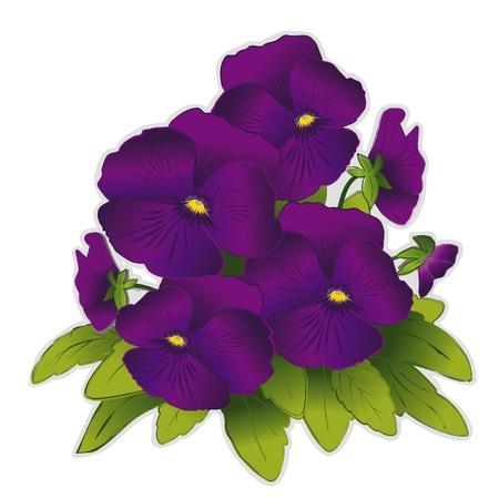 Purple Pansy Flowers  Vector