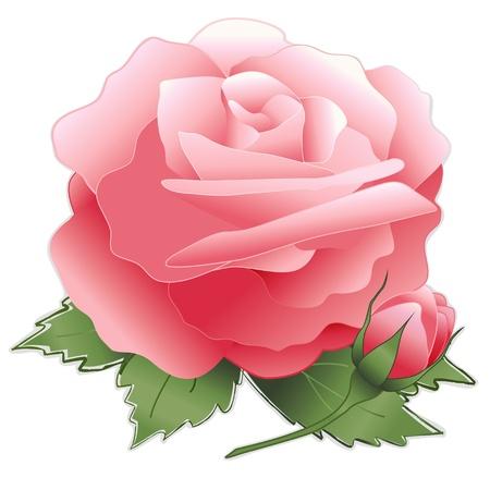 Pink Rose Flower Stock Vector - 12392296