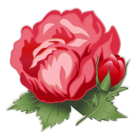 ダマスク ローズの赤い花