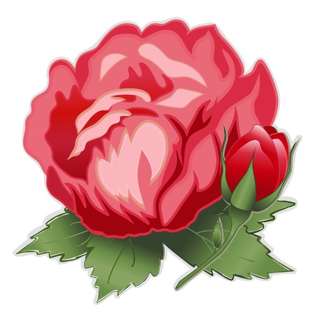 rosa: Red Damask Rose Flower Illustration