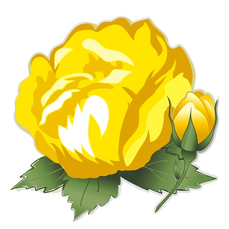 Yellow Damask Rose Flower Vector