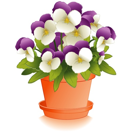 Johnny Jump Up Flowers (Pansies) in Clay Flowerpot Vector