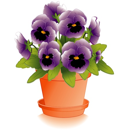 terracotta: Lavender Pansy Flowers in Clay Flowerpot