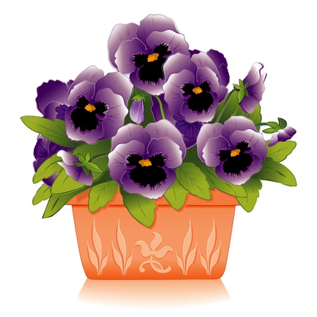 Lavender Pansy Flowers in Decorative Clay Flowerpot Planter Vector