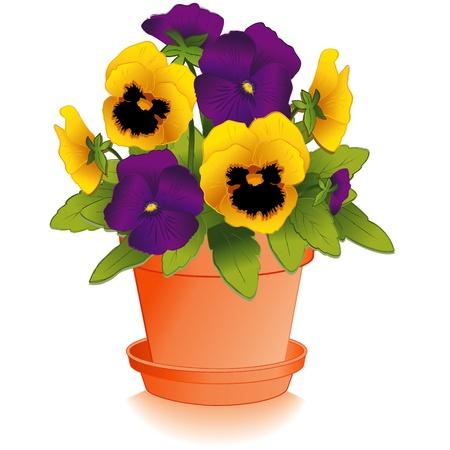 원예: 클레이 화분 보라색과 골드 팬지 꽃