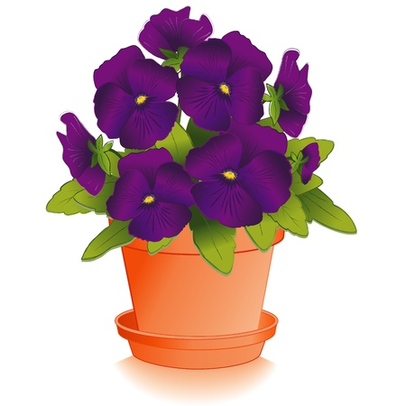 earthenware: Purple Pansy Flowers in Clay Flowerpot