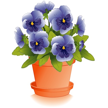 violas: Sky Blue Pansy Flowers in Clay Flowerpot
